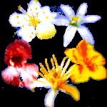 fleursB1